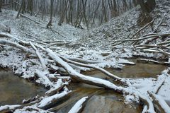 Beginning of winter. This is beginning of winter in Caucasus forest,pioneered snow Stock Photography