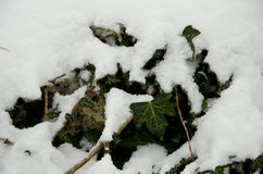 Beginning of winter, end of autumn, leaves under snow. Frozen Royalty Free Stock Images