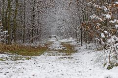 The beginning of winter. First snow. 