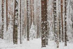 Beginning of winter Stock Photo