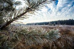 The beginning of winter Stock Photo