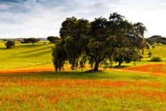 beginninggreenfieldfjäder royaltyfri fotografi