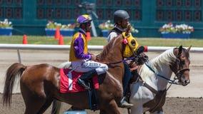 Begleiter-Pony und Jockey lizenzfreies stockbild