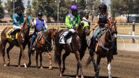 Begleiter-Ponys und Jockeys lizenzfreies stockbild