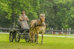 Begleiter-Tiere - Pferde lizenzfreie stockfotos