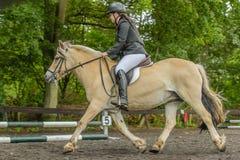 Begleiter-Tiere - Pferde lizenzfreie stockfotografie