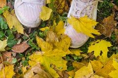 Begon een de herfstgoud te wervelen Stock Afbeelding