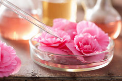 Begonia λουλούδια και σιφώνιο. aromatherapy και SPA Στοκ φωτογραφίες με δικαίωμα ελεύθερης χρήσης