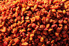 Begonia asciutta Fotografia Stock