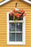 Begonia Basket Royalty-vrije Stock Fotografie