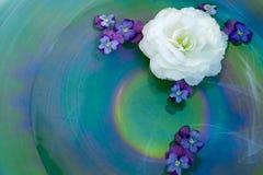 Begonia en Altviolen in een Kom van het Glas royalty-vrije stock afbeelding