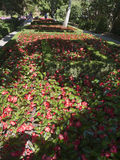Begonia flower bed with sun and shade. Nicely done landscaping Stock Photo