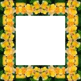 Begonia flower frame Stock Photos