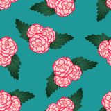 Begonia Flower rose, passion de Picotee première sur Teal Background vert Illustration de vecteur illustration libre de droits