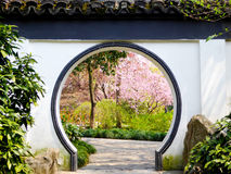 Begonia flowers blooming. Through a round door to appreciate Malus spectabilis inside Guilin Park early spring in Shanghai China Royalty Free Stock Photography