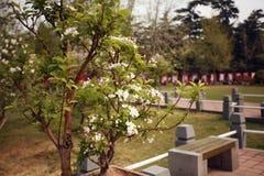 The garden is full of the vigour of springtime. Begonia flowers blooming in Zhengzhou Bi Sha Gang Park Stock Photography