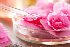Begonia flowers and pippette. aromatherapy and spa. Pink begonia flowers and pippette. aromatherapy and spa Stock Images