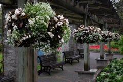 Begonia hanging basket stock photos