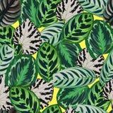 Begonia leaves pattern Stock Image