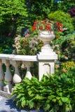 Begonia Planter Royalty-vrije Stock Foto