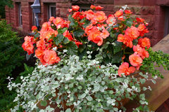 Begonia Pot. A decorative pot with begonia and hanging plants stock image