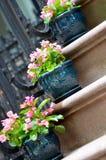 Begonia's op Treden Stock Fotografie