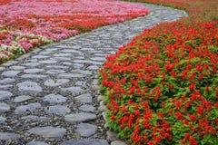 Begonia and Salvia splendens flower Royalty Free Stock Photos