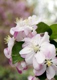 Begoniabloesems in de vroege lente royalty-vrije stock afbeeldingen