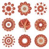 Begoniarexleaf Arkivfoto