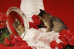 begonias τίγρη καθρεφτών γατακιών Στοκ Εικόνες
