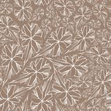 Begonias φύλλων Στοκ φωτογραφία με δικαίωμα ελεύθερης χρήσης