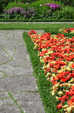 Begonias growing along the stone path Stock Photography