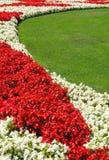 Begonias1 Stockfotografie