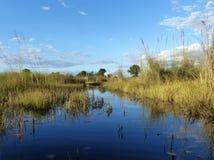 Begränsa kanalen i den Okavango deltan, Botswana Arkivfoto