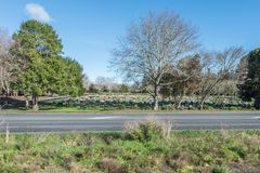 Begraafplaats door de kant van de weg onder weelderig gebladerte stock foto