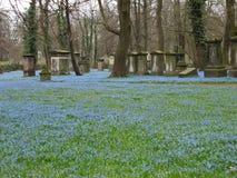 Begraafplaats met scilla stock afbeelding