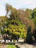 Begraafplaats onder de bomen Royalty-vrije Stock Afbeeldingen