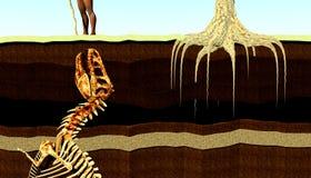 Begrabenes Fossil Lizenzfreies Stockbild