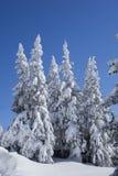 begravd snow Arkivbilder
