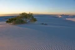 Begraven Boom bij Wit Zand Nationaal Monument bij Zonsondergang Royalty-vrije Stock Afbeelding