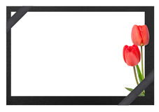 Begravnings- ram med tulpan arkivbild