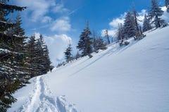 Begravt i snö som fotvandrar slingan arkivbild