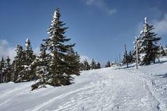 Begravt i snö som fotvandrar slingan fotografering för bildbyråer