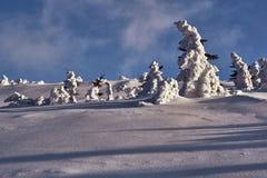 Begravt i snöskog i de jätte- bergen fotografering för bildbyråer