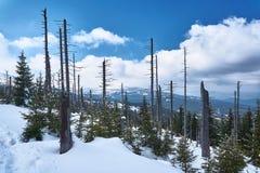Begravt i snöskog och torra träd royaltyfri bild