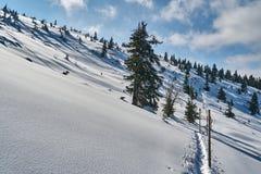 Begravt i snöskog och torra träd arkivbilder