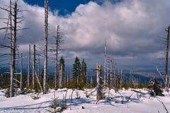 Begravt i snöskog och torra träd arkivbild