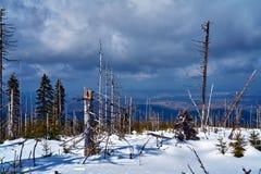 Begravt i snöskog och torra träd i de jätte- bergen royaltyfria bilder