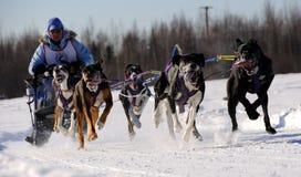 Begrenztes nordamerikanisches Schlitten-Hunderennen Lizenzfreie Stockbilder