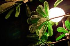 Begrepp av den mörka varma tropiska natten Den glödande runda lyktan exponerar de gröna sidorna av tropiska växter på natten Royaltyfri Foto